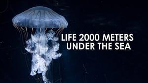 Life 2,000 Meters Under the Sea