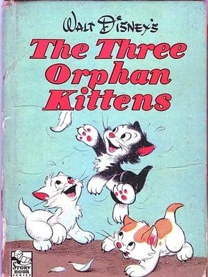 Three Orphan Kittens