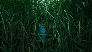 In the Tall Grass (2019) Film Online Subtitrat