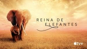 Captura de Reina de elefantes (2019)