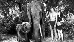 Tarzan és fia
