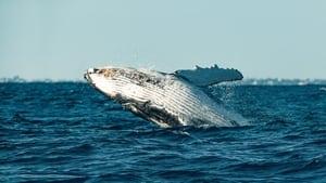 O Segredo das Baleias: 1 2