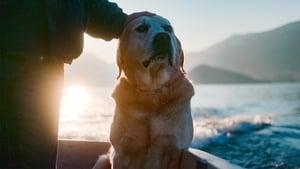 Dogs 1. Sezon 3. Bölüm (Türkçe Dublaj) izle