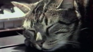 Silent movie from 1988: Cat Listening to Music