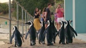 Assistir Cidade dos Pinguins: 1 Temporada Episódio 6