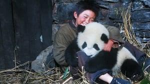 Trail of the Panda (2009)