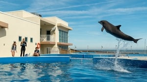 Bernie the Dolphin 2018