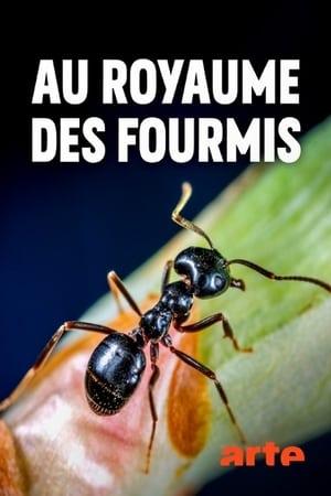 Au royaume des fourmis