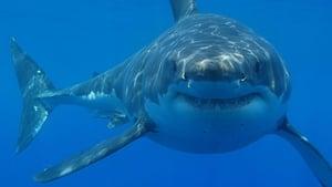 Submarino El tiburon asesino de 12 metros