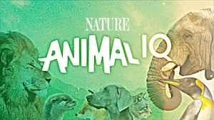 Animal IQ