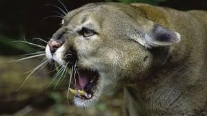 Wild Predator Invasion