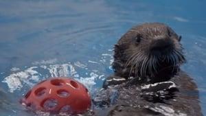 The Aquarium Season 02 Episode 02 S02E02