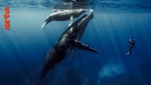 Quand baleines et tortues nous montrent le chemin (2020)