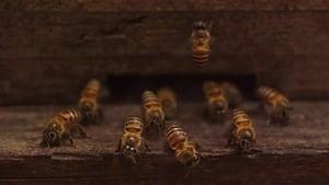 Plan Bee (2019)