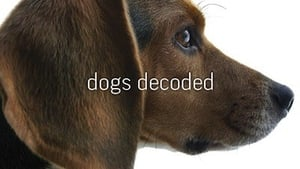 Image Dogs Decoded