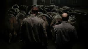 Bullhead [2011]