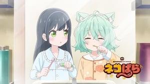 Nekopara 1. Sezon 11. Bölüm (Anime) izle