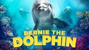 Bernie the Dolphin 2 2020