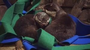 Otter Tale