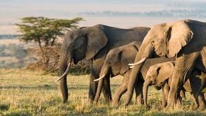 Elefanten [2020]