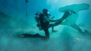 مشاهدة الوثائقي Man vs. Shark 2019 مترجم