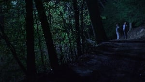 Below the Trees (2018)