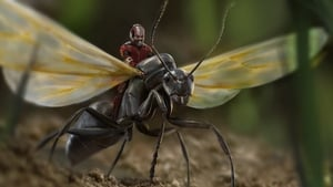 Ant-Man filmer