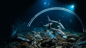 700 Sharks (2018)