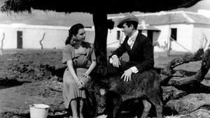 movie from 1949: Currito de la Cruz
