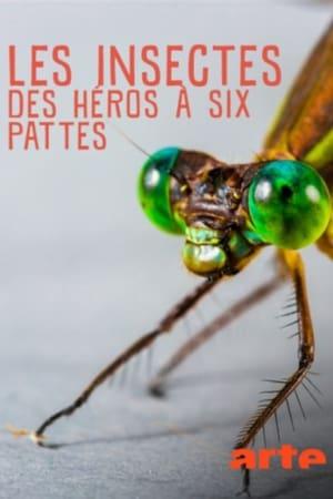 Les insectes, des héros à six pattes