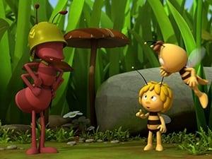 Maya the Bee: 1×18