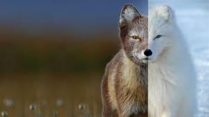 David Attenborough: Życie w kolorze
