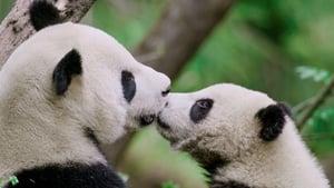 China: Misteriosa y salvaje