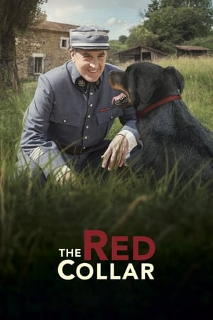 The Red Collar-Sophie Verbeeck