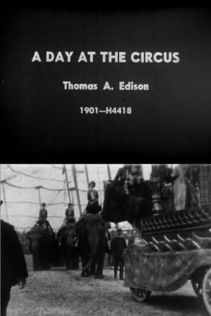 Day at the Circus