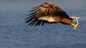Eagle – Queen of The Skies مترجم مباشر اونلاين