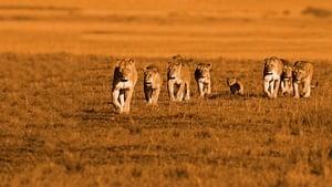 African Cats Online Lektor PL FULL HD