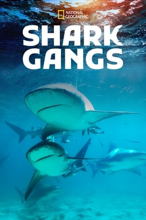 Shark Gangs              2021 Full Movie