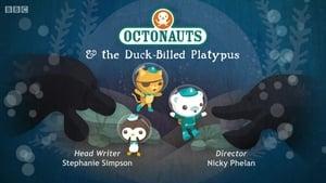The Octonauts: 3×10