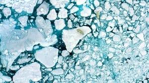 Captura de The Last Ice (2020)