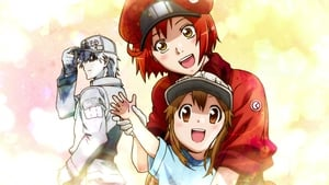 Hataraku Saibou! Season 2