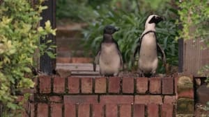 Assistir Cidade dos Pinguins: 1 Temporada Episódio 7