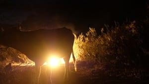 مشاهدة فيلم Desert Lights 2021 مترجم أون لاين بجودة عالية