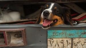 Ötösfogat IV. – Az egyiptomi kaland