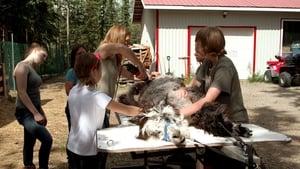 Dr. Oakley, Yukon Vet Season 3 Episode 5