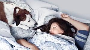 Assistir Downward Dog (Cão Descendente) – Todas as Temporadas Online