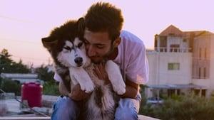 Dogs 1. Sezon 2. Bölüm (Türkçe Dublaj) izle