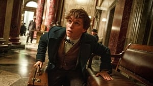 Fantastik Canavarlar Nelerdir, Nerede Bulunurlar – Fantastic Beasts and Where to Find Them