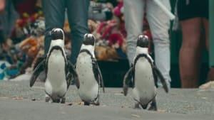 Assistir Cidade dos Pinguins: 1 Temporada Episódio 1