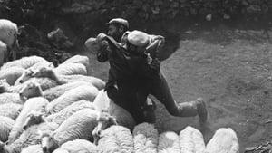 Bandits of Orgosolo (1961)
